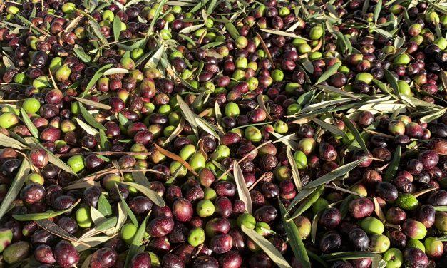 S.O.S – Innovazioni tecnologiche nella produzione dell'olio extravergine di oliva
